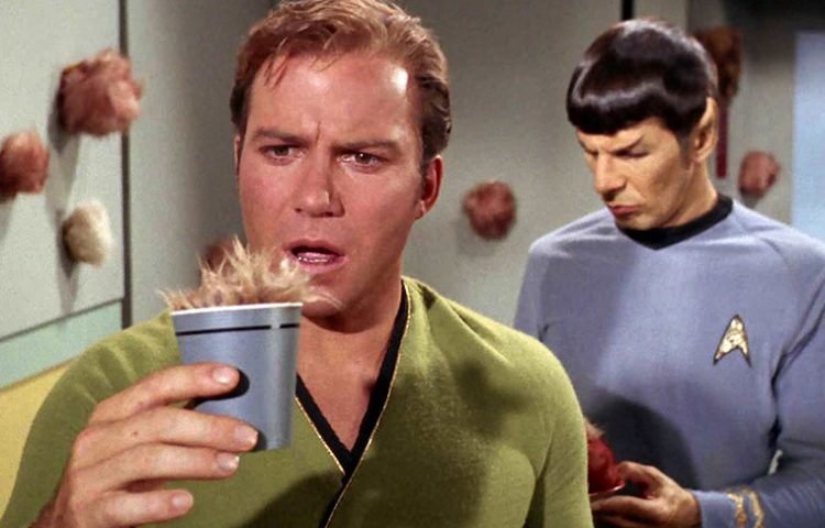 Tribbles To Appear On 'Star Trek: Discovery,' Series Aims For Hard PG-13 Rating