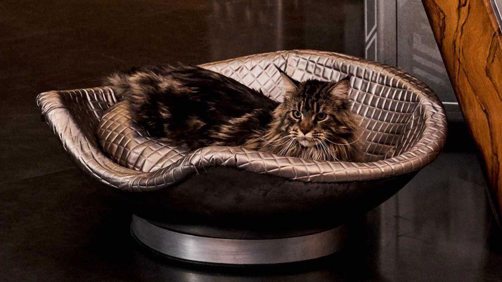Book's cat Grudge